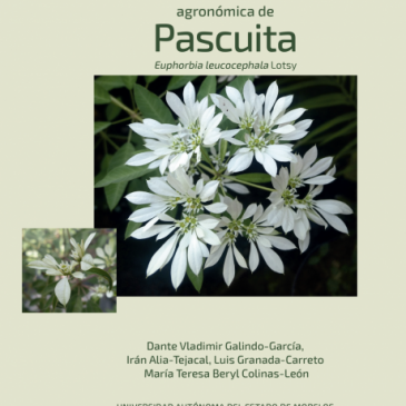 Manual de caracterización agronómica de Pascuita. Euphorbia leucocephala Lotsy